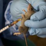 Breaking: 103 killed Lassa fever in 16 states