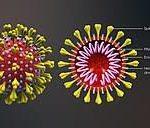 Breaking News: Coronavirus invade Nigeria; First case confirmed in Lagos